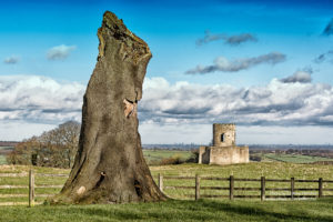 Tree trunk and Oliver Duckett Folly