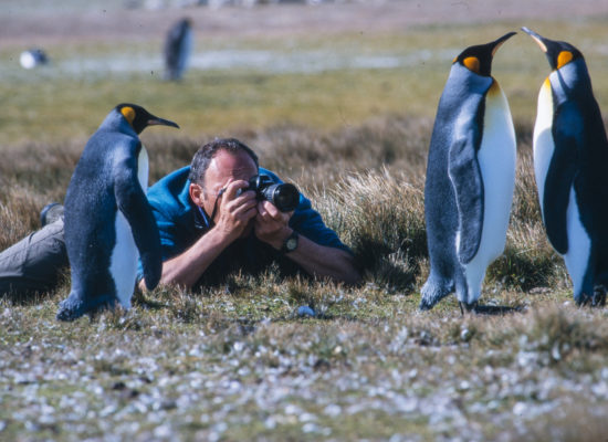 Photographing King Penguin